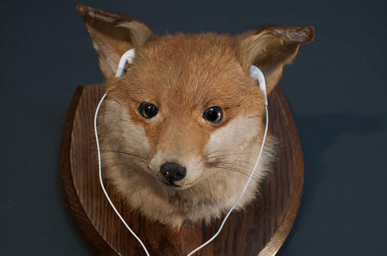 Mounted fox head with earphones at Portland House 1870